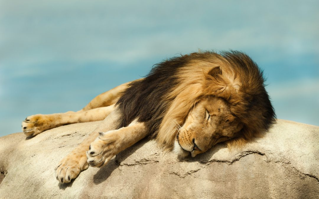 Sometimes it's easier to care about dead lions than dead people